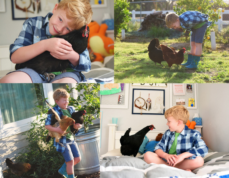 Boy and Chicken Pet